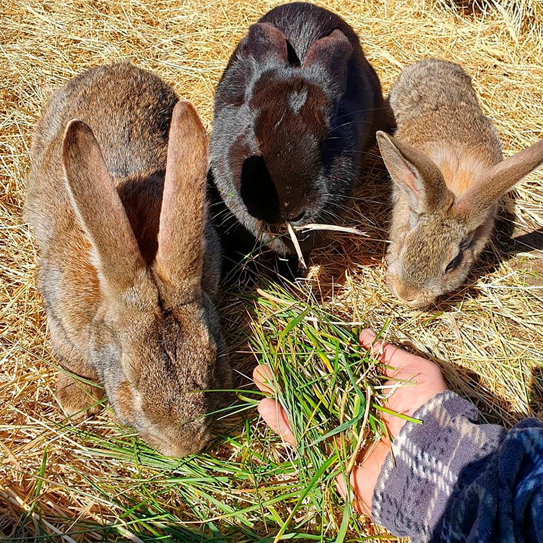 Økologisk kanin